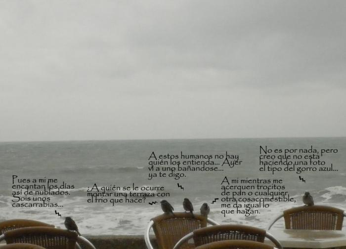 barrosa-terraza-gorriones